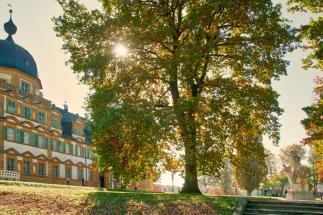 Baum im Herbst vor Schloss Seehof