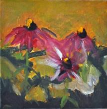 Echinacea purpurea 20x20