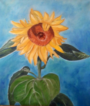 Sonnenblume, Öl auf Leinwand, 50cm x 70 70cm, 2006